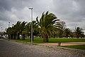 Lisboa (8321549677).jpg