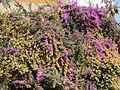 Lisbon - Wall of flowers 2 (23191531366).jpg