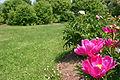 Littlefield Garden Flower.jpg