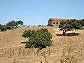 Livestock, Oschiri, Province of Olbia-Tempio, Sardinia, Italy - panoramio.jpg