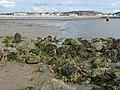 Llandudno - klify - północno zachodnie wybrzeże Angli - panoramio - dzidek (7).jpg