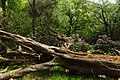Loch Lomond and The Trossachs National Park in the end of May-2.jpg