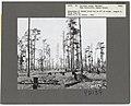 Logging Waste - General - DPLA - 1bbf96bedf0a76c22caead02969277d7.jpg