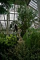 London - Kew Gardens - Temperate House 1863-1903 Decimus Burton - Main Rectangular Hall- Subtropical Trees & Palms - View SSW on Copy of Donatello's David.jpg