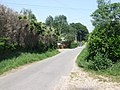 Looking along Sandy Lane, Mundham Common - geograph.org.uk - 452811.jpg