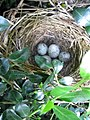 Low Nest (4607259645).jpg