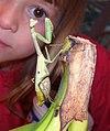 MCC-Mantis-10-27-01.jpg