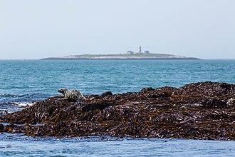 Machias Seal Island - Machias Seal Island on the horizon