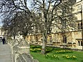 Magdalen College mulberry tree - geograph.org.uk - 721848.jpg