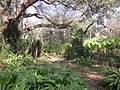 Magnolia Lane Plantation Quarterhouse Chimney 1.JPG