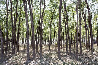 Barguna District - Image: Mangrove Forest in Barguna, Bangladesh (2)