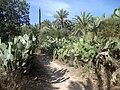 "Marokko- Agadir- Hohe Atlas- Wanderung im ""Paradiestal"" -Feigenkaktus - panoramio.jpg"