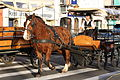 Martinique Carriage on Rue Ernest Deproge IMG 0416 C.JPG