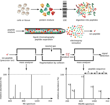 Protein mass spectrometry - Wikiwand