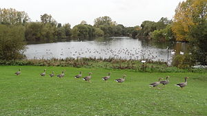 Mayesbrook Park - Image: Mayesbrook Park 2