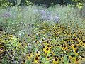 Meadow (1363950232).jpg