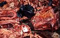 Meat Markets - Flickr - Dick Culbert.jpg