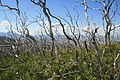 Mesa Verde National Park Park Point Overlook Dead Trees 2006 09 11.jpg