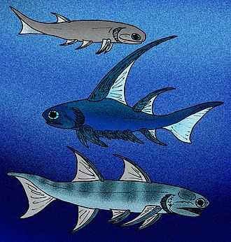 Acanthodii - Mesacanthus, Parexus, and Ischnacanthus of Early Devonian Great Britain