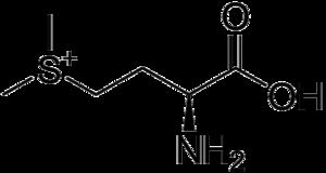 S-Methylmethionine - Image: Methylmethionine