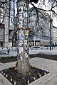 Michael Jackson Memorial Tree, Budapest, Hungary (Ank Kumar) 07.jpg