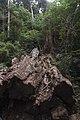 Minnamurra Rainforest - panoramio (23).jpg