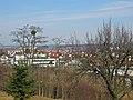 Mistletoe, Misteln in der Nähe von Magstadt - panoramio.jpg