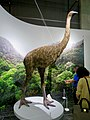 Model of Giant Moa - 1.jpg