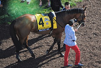 Practical Joke (horse) - Practical Joke in the walking ring before the 2017 Haskell Invitational at Monmouth Park