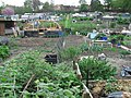 Moorlands Ave allotments - geograph.org.uk - 412022.jpg