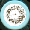 Mosquitos messed up (1888750788).png