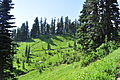 Mount Rainier - Paradise - looking toward Moraine Trail - August 2014 - 01.jpg