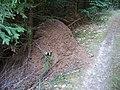 Mraveniště nad Cukrovic mlýnem (01).jpg