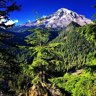Mount Rainier National Park - Mt. Rainier National Park view.
