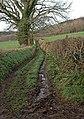 Muddy track near Bulverton, Sidmouth - geograph.org.uk - 1637826.jpg