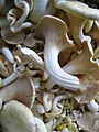 Mushroom (4701377704).jpg
