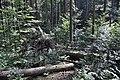 NPR Boubínský prales 20120910 18.jpg