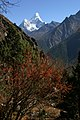Namche to Dhole-46-Roter Busch-Ama Dablam-2007-gje.jpg