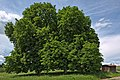 Naturdenkmal Drei Kastanien, Kennung 82350800004, Wildberg, von Südosten 01.jpg