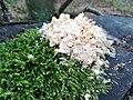 Nature of Lasy Bierzwnickie (8).jpg