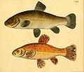 Naturgeschichte in Bildern mit erläuterndem Text (Taf. CXLII) (6059231464).jpg