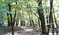 Naturpark und Biosphärenreservat Pfälzerwald - panoramio (10).jpg