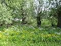 Naturschutzgebiet Heuckenlock 21.05.2014 Phase 23.JPG