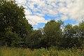 Naturschutzgebiet Neuenkirchener Moor 04.JPG