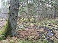 Naturschutzgebiet Winterried 03.JPG