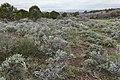 Near Oak Hill - Flickr - aspidoscelis.jpg