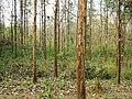 Nedumkayam Reserve Forest, Nilambur - panoramio (5).jpg