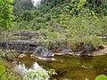 Nepenthes northiana habitat2.jpg