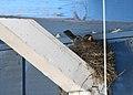 Nest time (2448181901).jpg