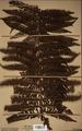Neuchatel Herbarium Types NEU000113036.tif